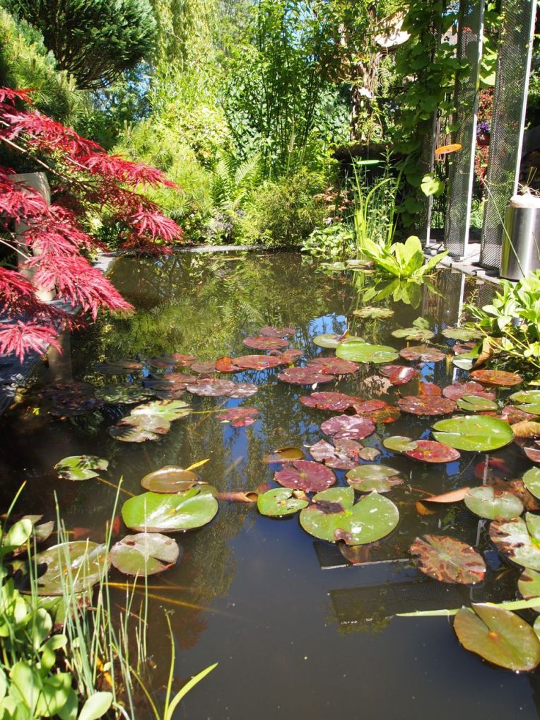 pond at Leo Koolen Floral Design