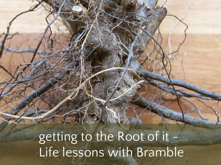 Life lessons with Bramble
